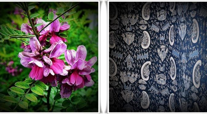 Indigofera - Pewarna Tekstil Alami Berwarna Biru Tua